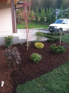 entry border beds street appeal new construction landscaping native plants trees quick sale