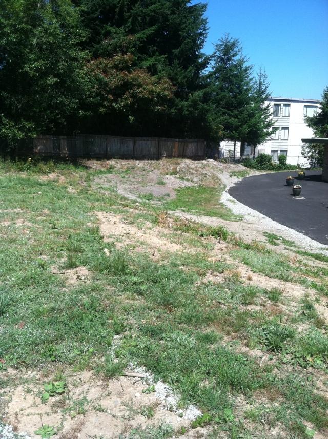 lakeside milam burien grounds upgrade commercial property landscape improvement